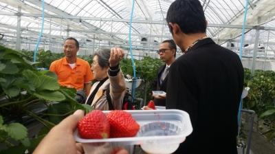Kunjungan delegasi DIY ke kebun strawberry Yamanashi Fuji Fruit Park